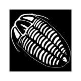 trilobit-min